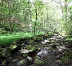 habitat management planning