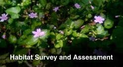 Habitat Survey and Assessment