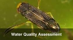 Water Framework Directive and Water Quality Assessment