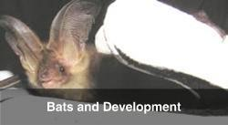 Bat Surveys and Development