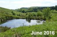 Lightwood Reservoir Habitat Creation