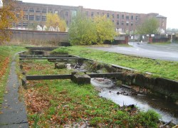 Penwortham Mill Ecology